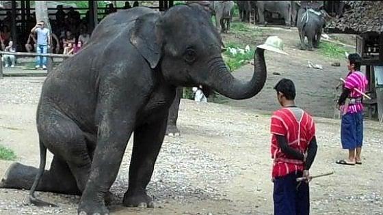 Coronavirus, chiusi i parchi in Thailandia. Dopo 44 anni stop agli show con elefanti. Non saranno più usati per divertire